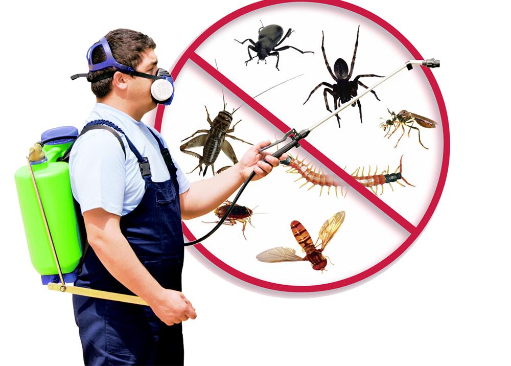 Pest Control in Melbourne